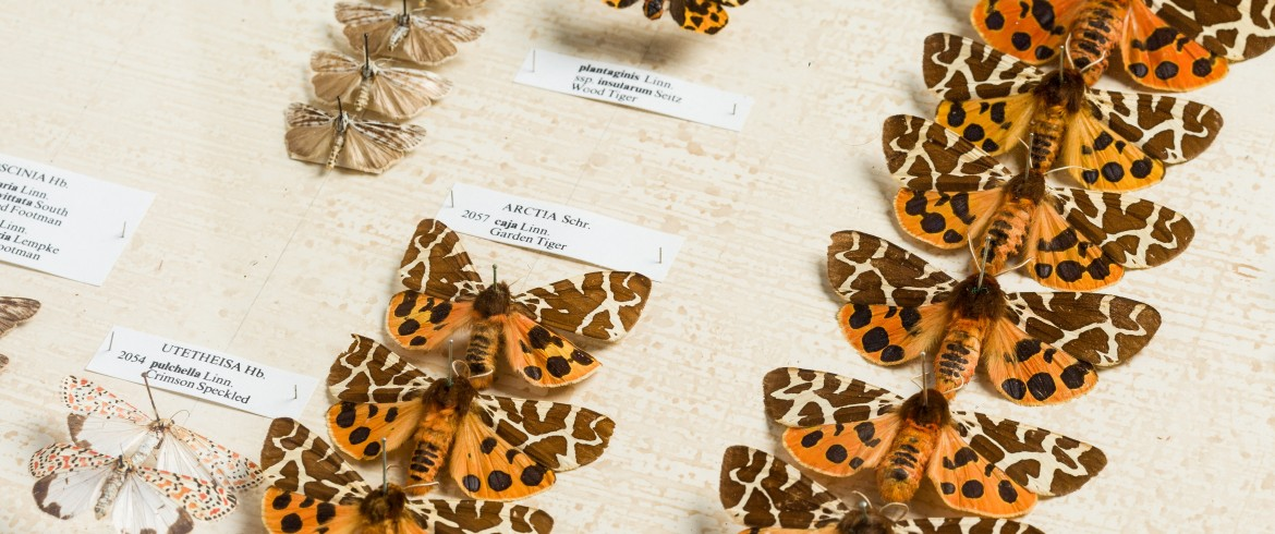 Moths, Rollason Collection