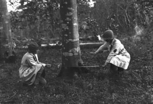 Two members of the Women's Land Army, kneeling in a wooden area, preparing to fell a tree with a crosscut saw. Photographer: A W Jordan. © From the collection of the RIC (TRURI-1972-2-6).